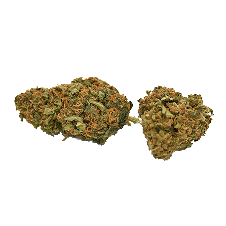 PACK FLEURS ORANGE BUD